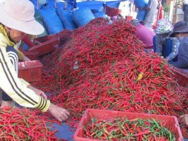 """Doanh nghiệp kêu trời vì """"tắc cửa"""" ớt tươi xuất khẩu sang Trung Quốc"""