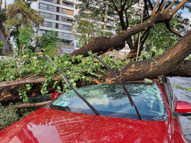 TP.HCM: Cây xanh bật gốc đè nát ô tô, xe máy, nhiều người bị thương