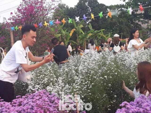 """Teen Đà Nẵng, bạn đã check-in khu vườn """"tím lịm tìm sim"""" giữa lòng thành phố chưa?"""