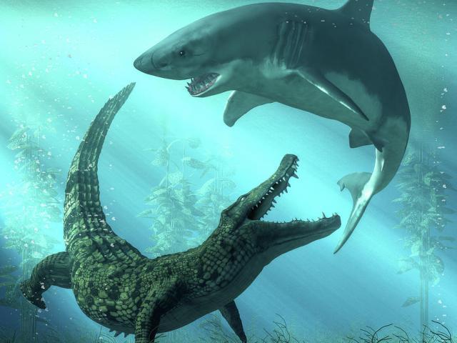 Cuộc chiến hiếm găp giữa cá sấu và cá mập, con nào chiến thắng?