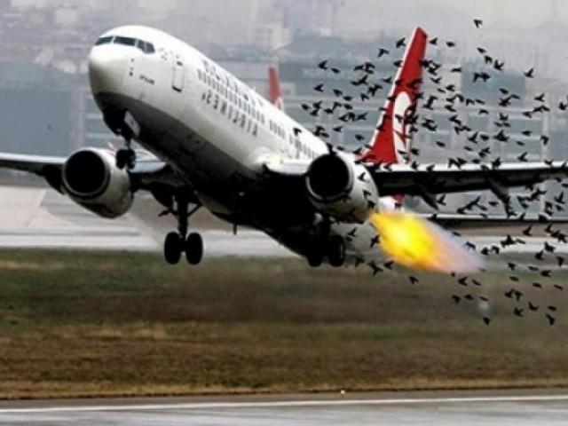 Chim va làm vỡ ống dầu thuỷ lực máy bay