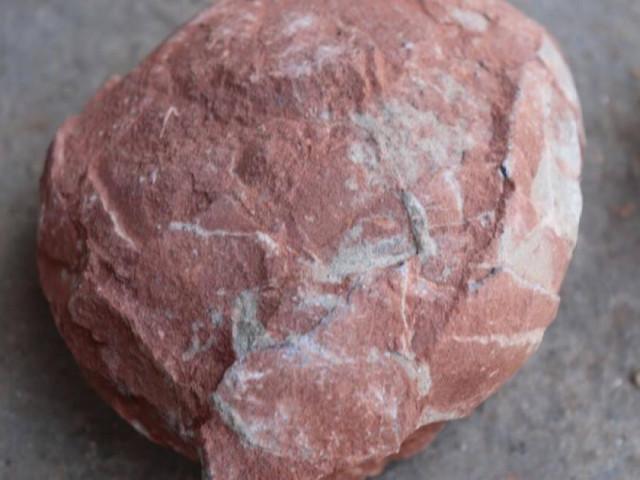 Trung Quốc tuyên bố tìm thấy 10 quả trứng khủng long từ thời kỷ Phấn trắng