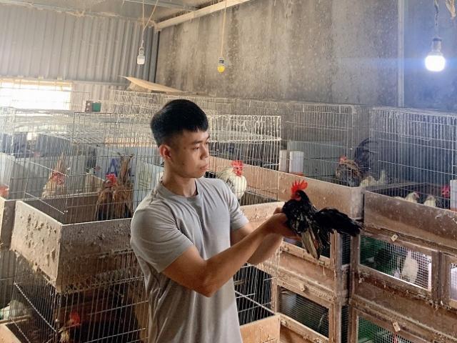 9x Hải Phòng bỏ việc nghìn đô về nuôi gà lực sĩ, mỗi con bán cả triệu đồng