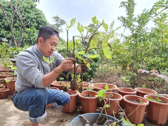 Bỏ 250.000 đồng mua cây này về trồng thử, sau 5 năm thu về hàng trăm triệu/năm