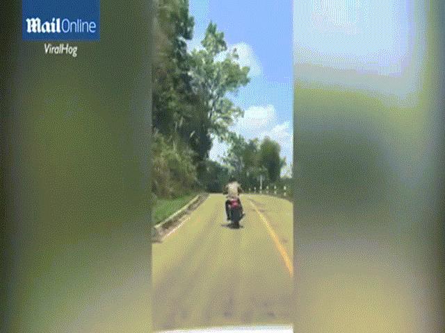 Video: Đang bò trên đường, rắn độc bất ngờ bay lê không trung đớp chân người đi xe máy