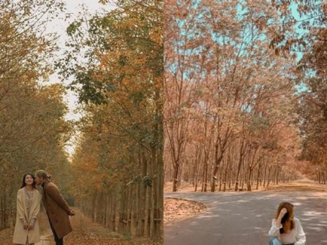 Bình Phước: Vẻ đẹp hoang sơ từ những cánh rừng cao su mùa thay lá lãng mạn như phim Hàn