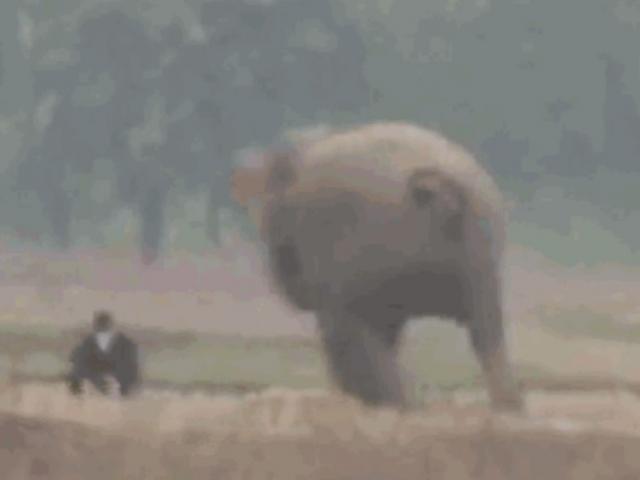 Clip: Chụp ảnh tự sướng với voi, thanh niên say rượu suýt bị dẫm chết