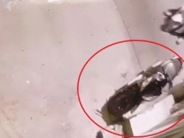Video: Trộm bẻ khóa, lấy xe tay ga trong chớp mắt
