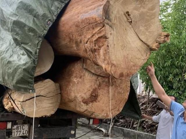 Chuyện lạ về nguồn gốc gỗ cổ thụ bị bắt giữ