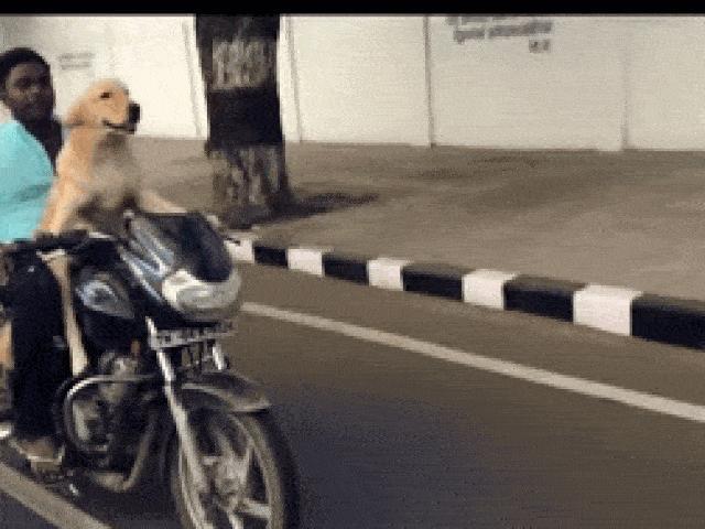 """Rùng mình cảnh cho chó """"điều khiển"""" xe máy với tốc độ cao"""