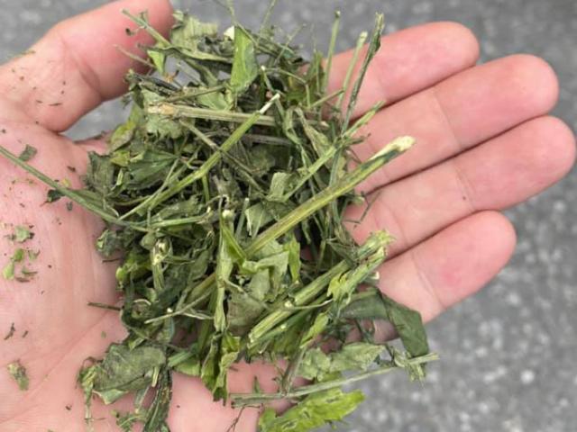 Dân tìm mua cây xuyên tâm liên về điều trị Covid-19, chuyên gia nói gì?