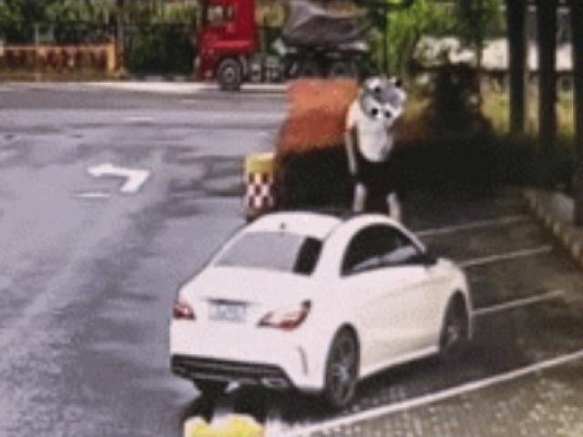 """Xe phanh gấp giữa đường cao tốc, cặp đôi có hành động """"bất thường"""" khiến cảnh sát lắc đầu ngán ngẩm"""
