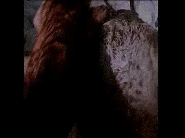Video: Chúa tể của rừng Taiga lật kèo cực gắt hạ gục lợn rừng khổng lồ