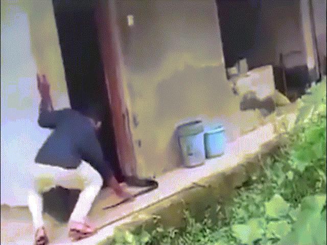 """Video: Thợ bắt rắn Ấn Độ nắm đuôi hổ mang chúa 4,2m, bị phần đầu xuất hiện dọa """"mất mật"""""""