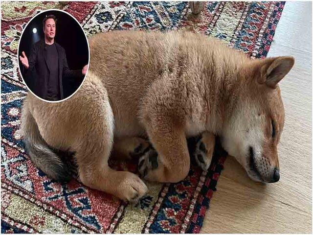 Chỉ khoe ảnh chó, Elon Musk cũng khiến một đồng tiền ảo tăng gần 1000%