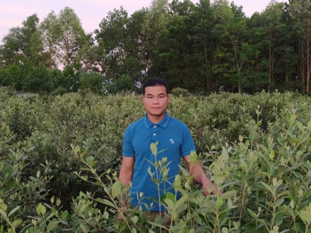 Đem cây dại về trồng để bán, người đàn ông Lạng Sơn thu cả tỷ đồng/năm